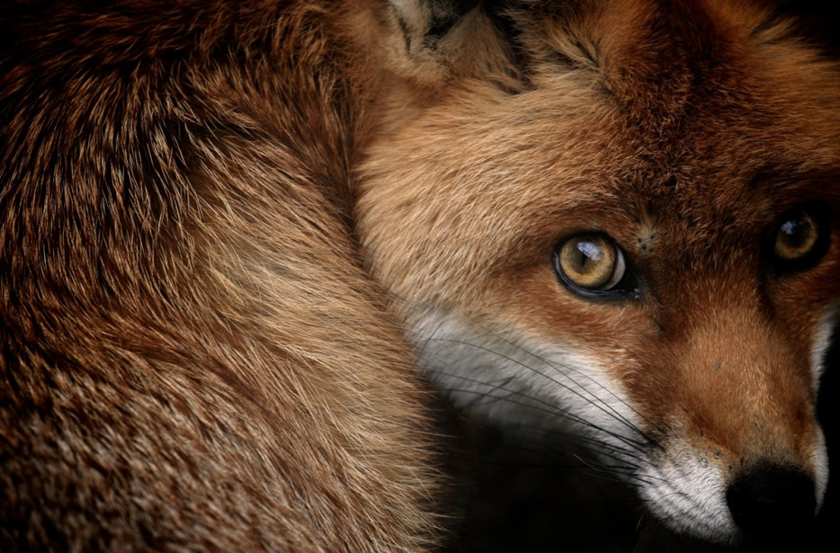 Fotos-da-vida-animal-em-momentos-extraordinários-Blog-Animal (39)