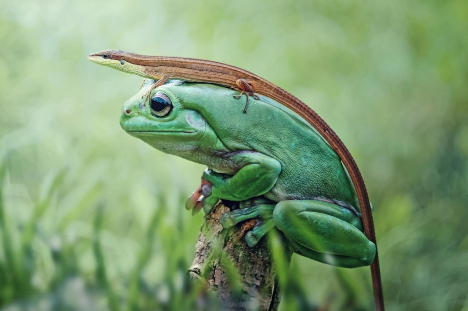 Fotos-da-vida-animal-em-momentos-extraordinários-Blog-Animal (40)