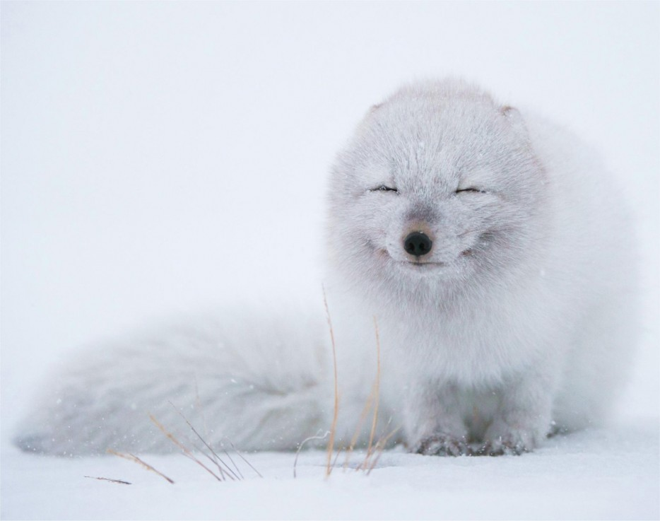 Fotos-da-vida-animal-em-momentos-extraordinários-Blog-Animal (41)