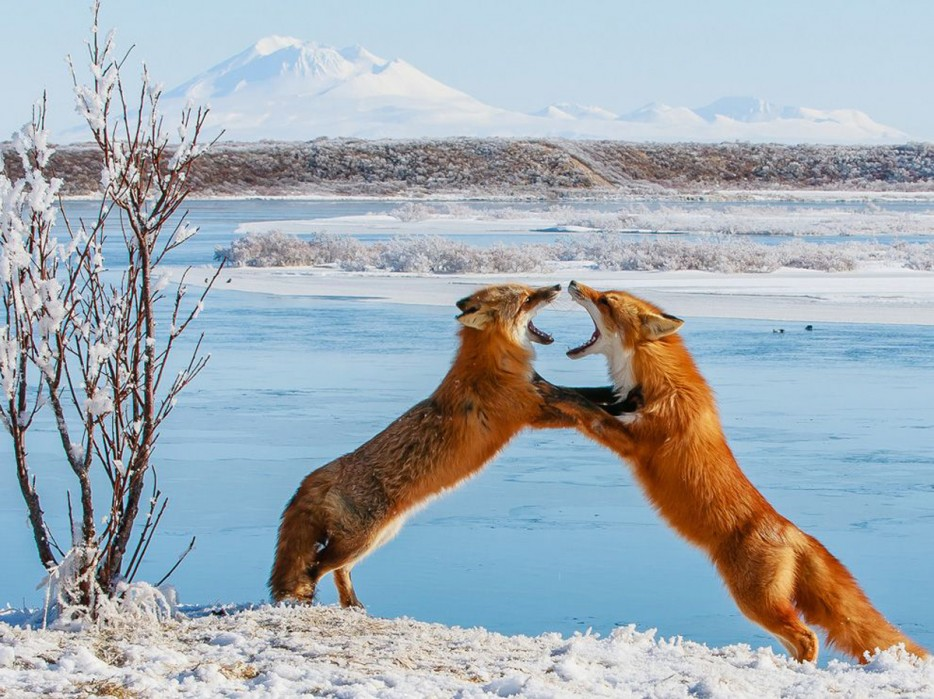 Fotos-da-vida-animal-em-momentos-extraordinários-Blog-Animal (42)