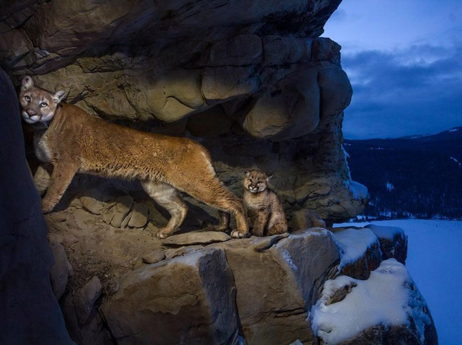 Fotos-da-vida-animal-em-momentos-extraordinários-Blog-Animal (45)