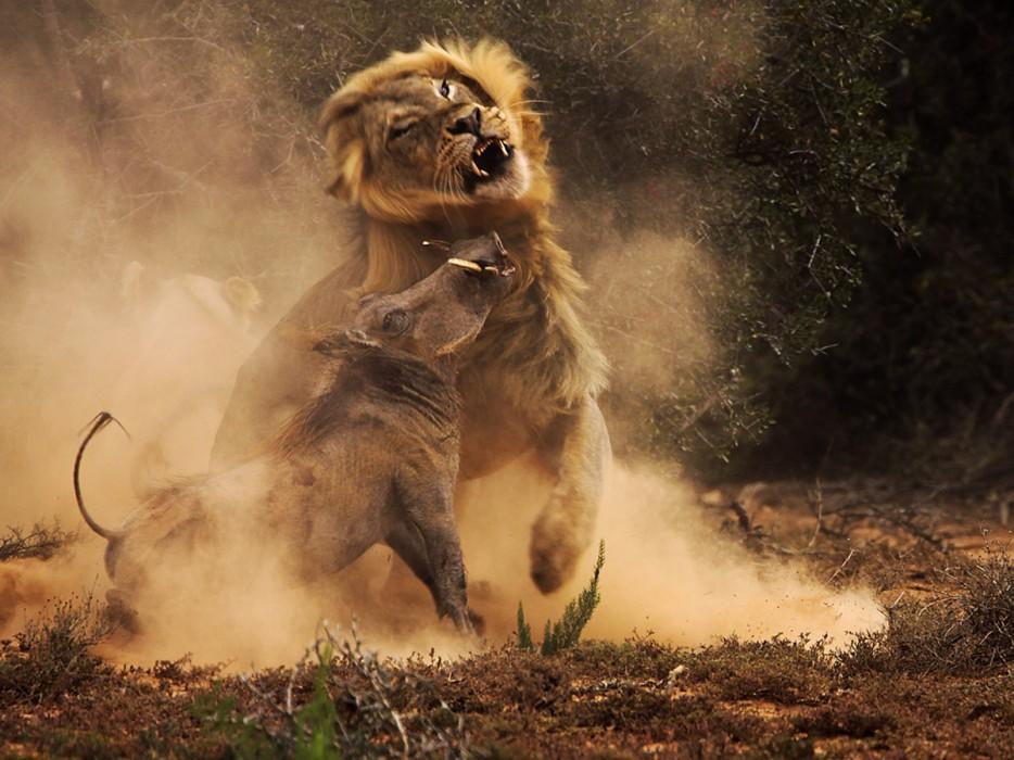 Fotos-da-vida-animal-em-momentos-extraordinários-Blog-Animal (47)
