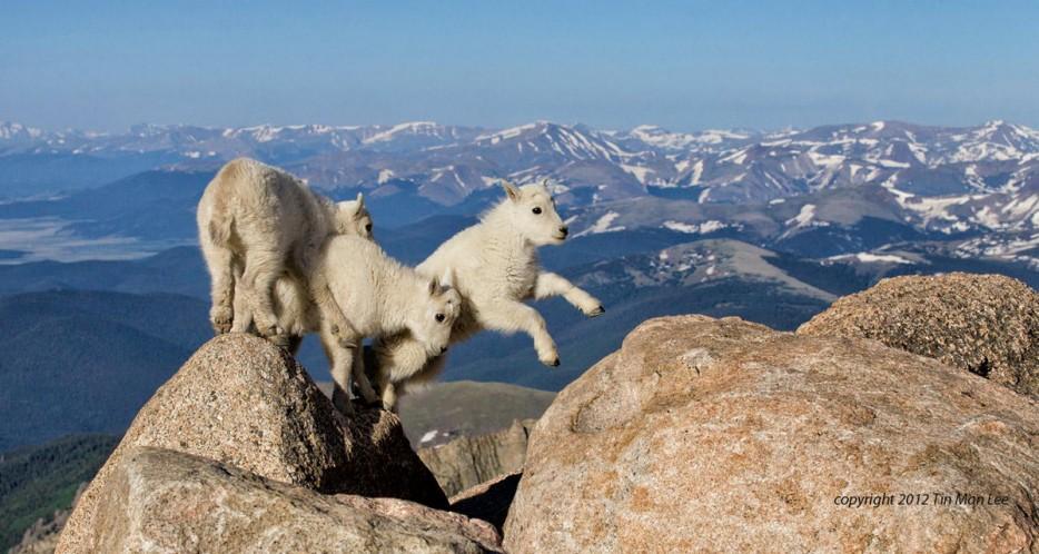 Fotos-da-vida-animal-em-momentos-extraordinários-Blog-Animal (48)
