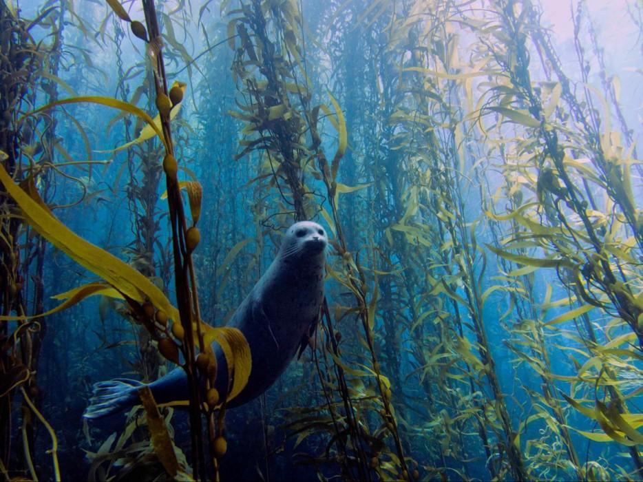 Fotos-da-vida-animal-em-momentos-extraordinários-Blog-Animal (6)