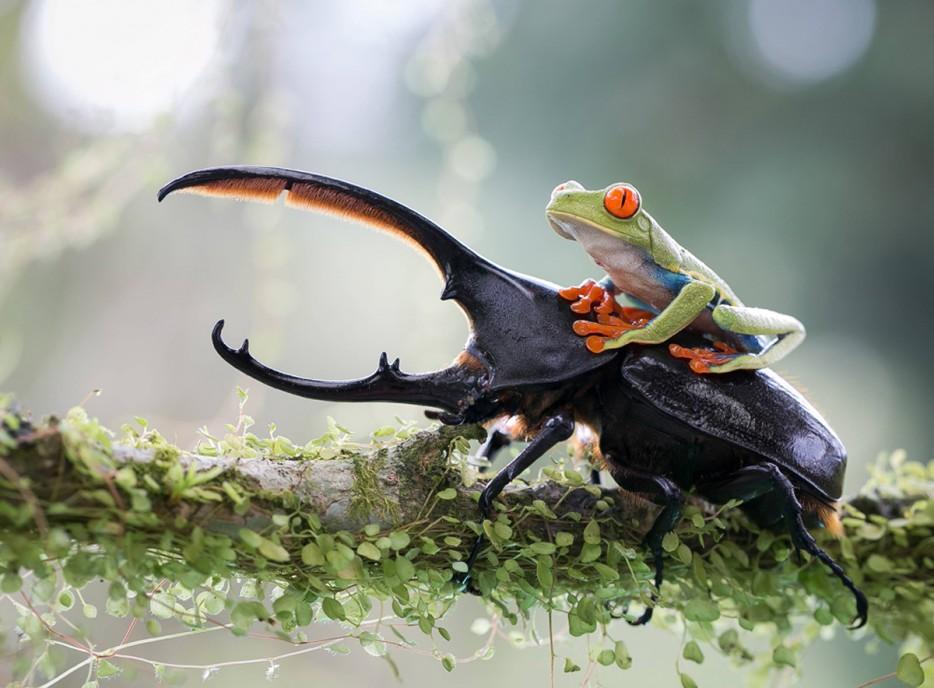 Fotos-da-vida-animal-em-momentos-extraordinários-Blog-Animal (8)