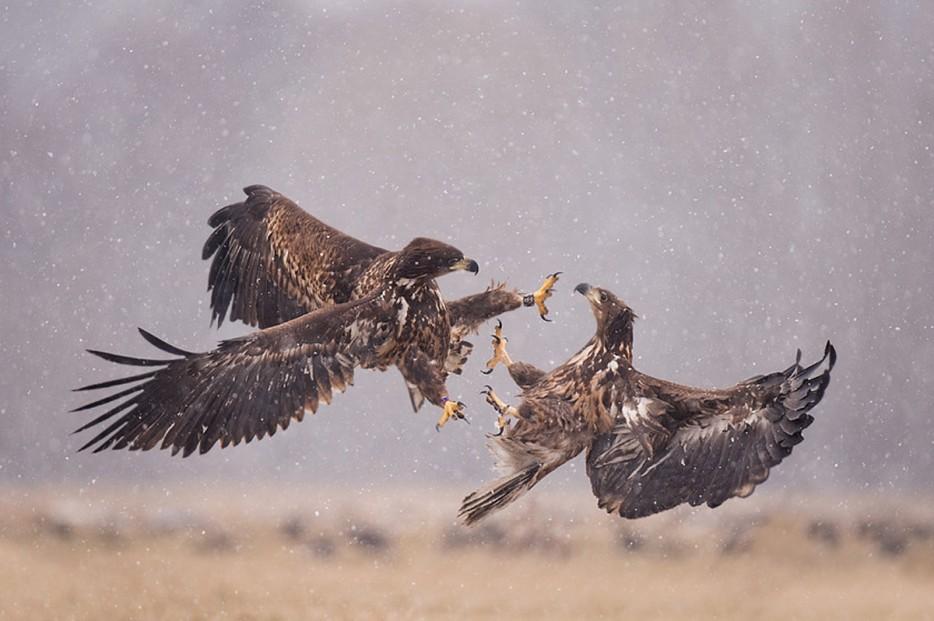 Fotos-da-vida-animal-em-momentos-extraordinários-Blog-Animal (9)
