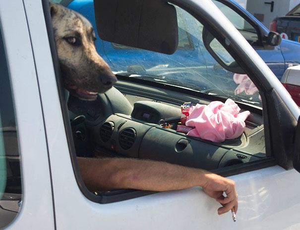 Fotos de cachorros tiradas no momento certo (15)