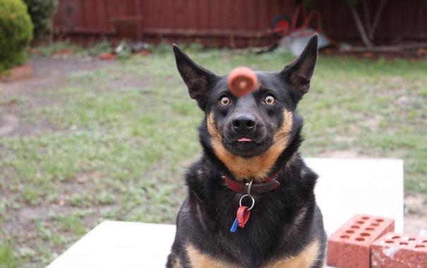 Fotos de cachorros tiradas no momento certo (25)