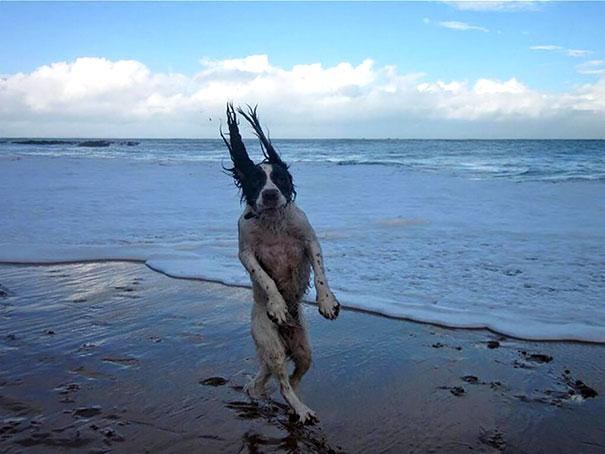 Fotos de cachorros tiradas no momento certo (6)