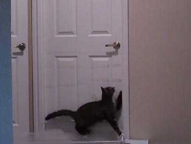 Gato inteligente desenvolve incrível capacidade de abrir portas