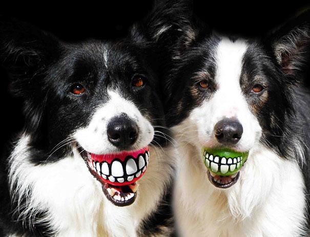 Ideias criativas para cachorros (21)
