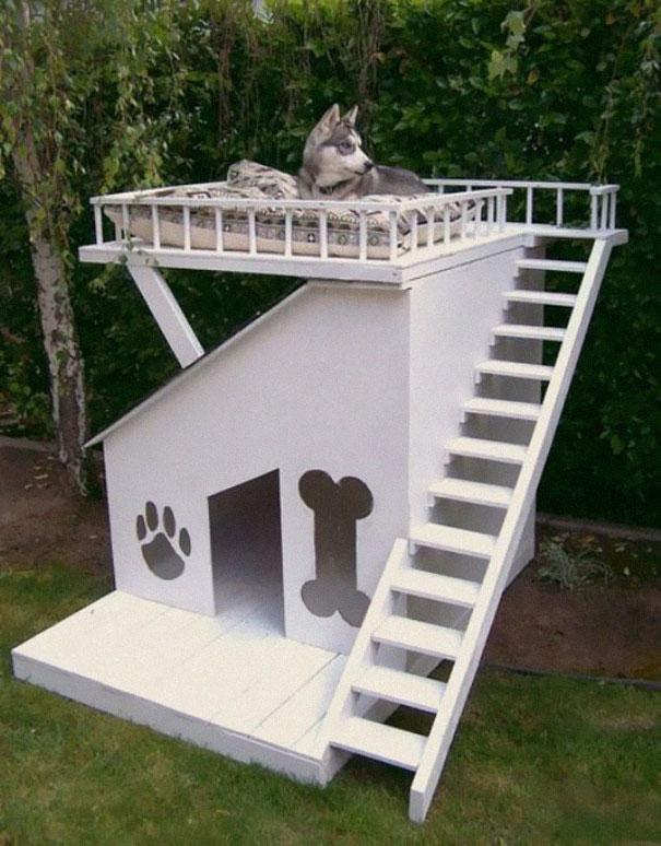 Ideias criativas para cachorros (6)