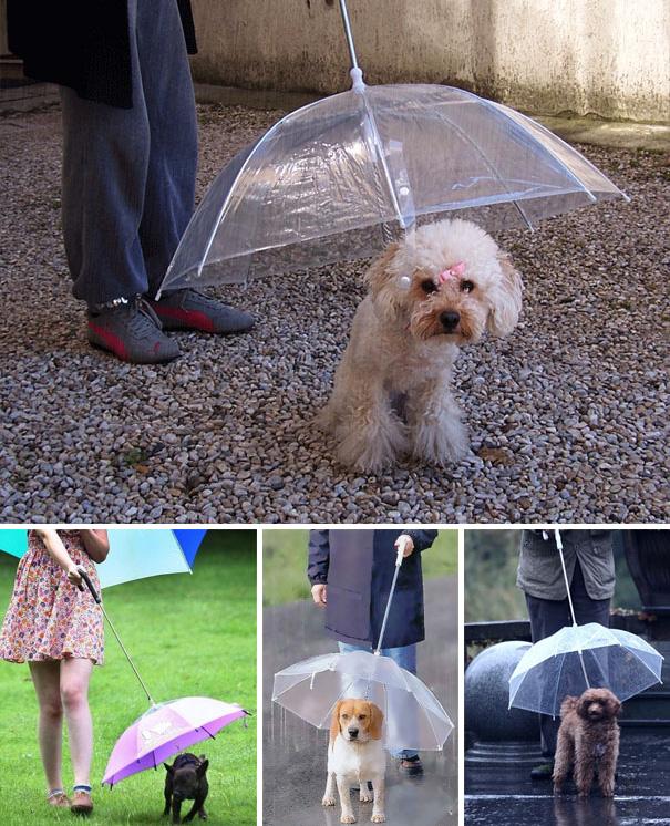 Ideias criativas para cachorros (8)