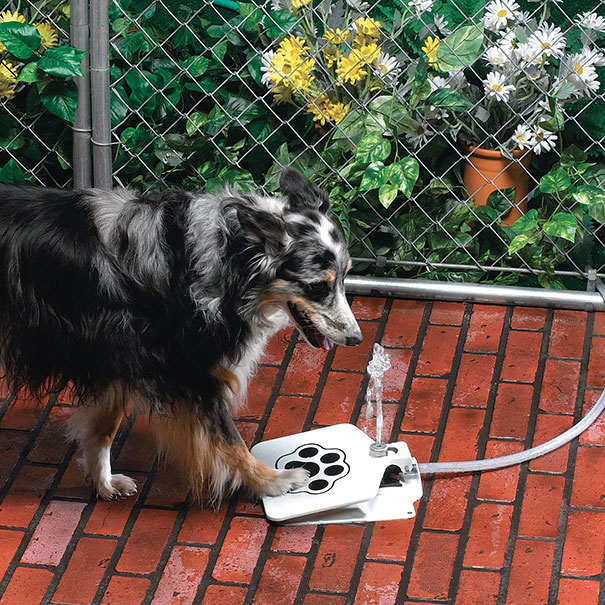 Ideias criativas para cachorros (9)