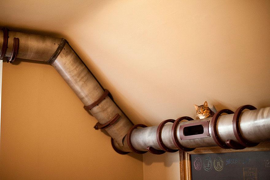 Mobília para amantes de gatos (10)