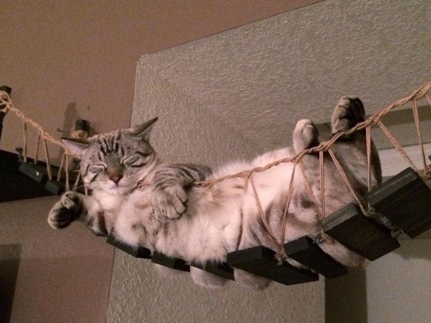 Mobília para amantes de gatos (13)