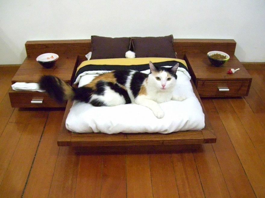 Mobília para amantes de gatos (2)