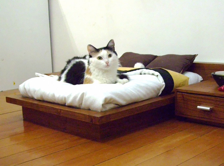 Mobília para amantes de gatos (3)