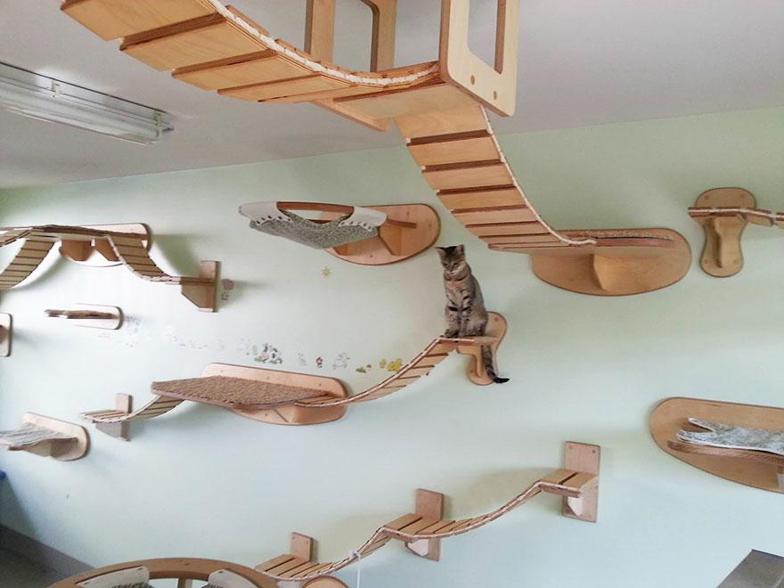 Mobília para amantes de gatos (34)