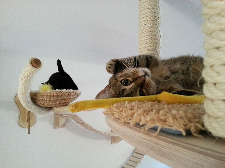 Mobília para amantes de gatos (35)