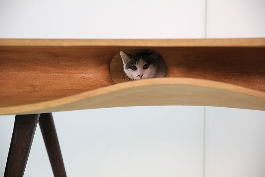 Mobília para amantes de gatos (5)