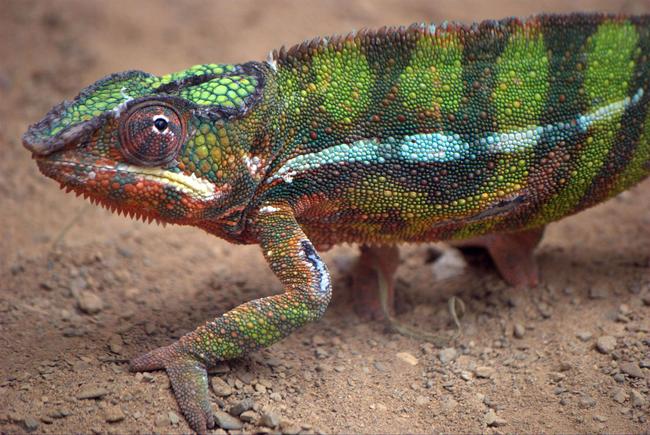 Os-animais-coloridos-mais-incríveis-da-natureza-Blog-Animal (1)