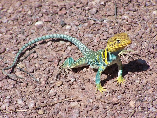 Os-animais-coloridos-mais-incríveis-da-natureza-Blog-Animal (10)