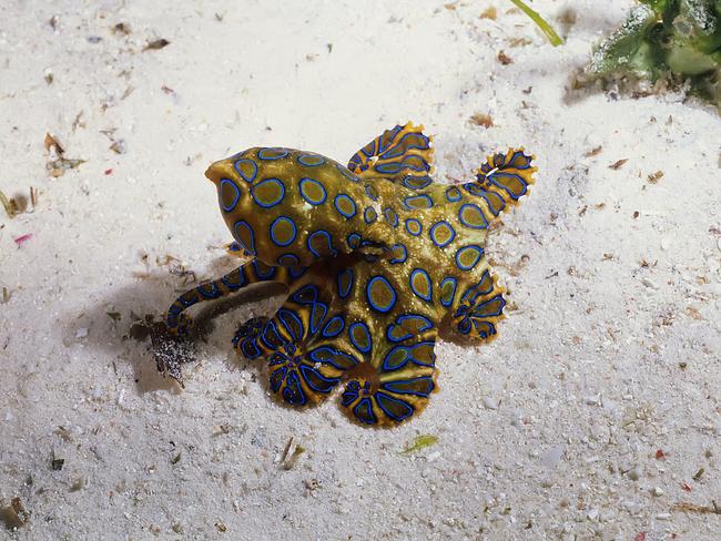 Os-animais-coloridos-mais-incríveis-da-natureza-Blog-Animal (12)