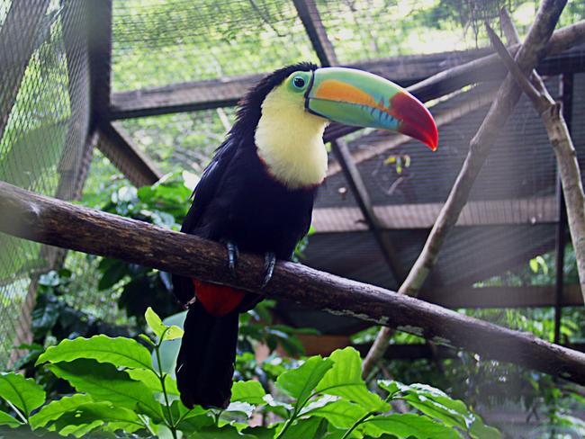 Os-animais-coloridos-mais-incríveis-da-natureza-Blog-Animal (13)