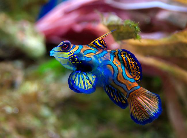 Os-animais-coloridos-mais-incríveis-da-natureza-Blog-Animal (15)