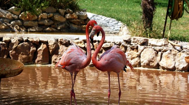 Os-animais-coloridos-mais-incríveis-da-natureza-Blog-Animal (16)