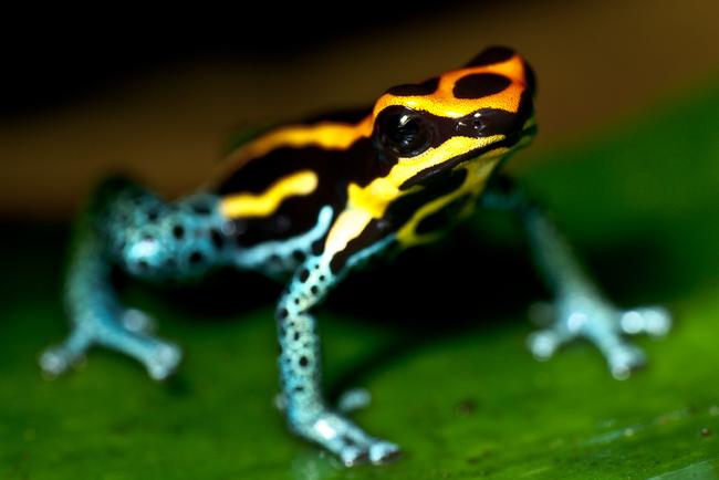 Os-animais-coloridos-mais-incríveis-da-natureza-Blog-Animal (17)