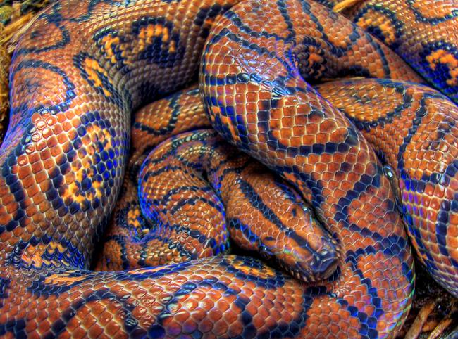 Os-animais-coloridos-mais-incríveis-da-natureza-Blog-Animal (19)