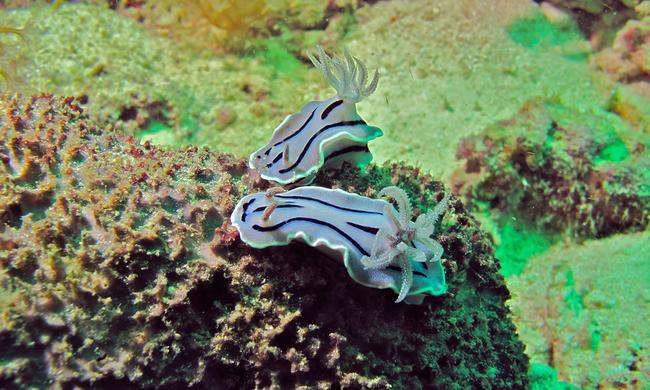 Os-animais-coloridos-mais-incríveis-da-natureza-Blog-Animal (20)