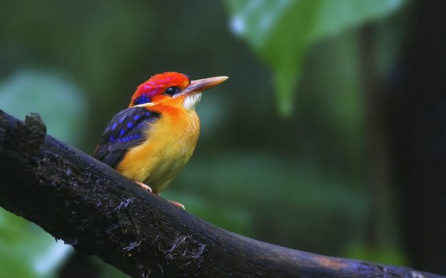 Os-animais-coloridos-mais-incríveis-da-natureza-Blog-Animal (23)