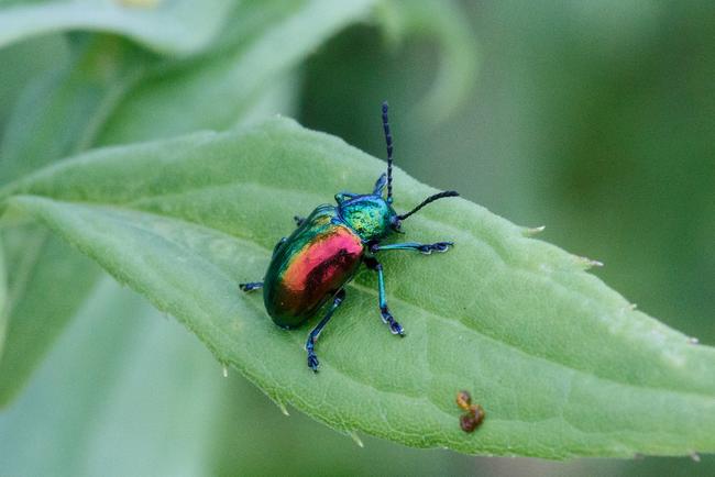Os-animais-coloridos-mais-incríveis-da-natureza-Blog-Animal (24)