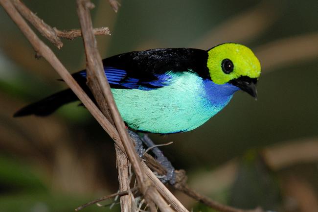 Os-animais-coloridos-mais-incríveis-da-natureza-Blog-Animal (25)