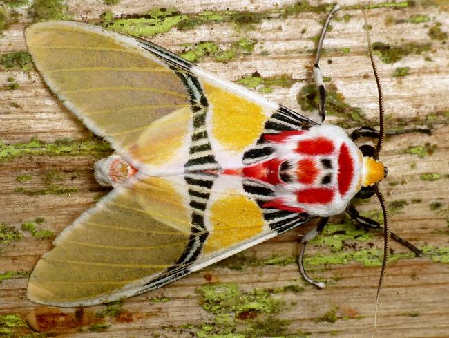 Os-animais-coloridos-mais-incríveis-da-natureza-Blog-Animal (28)