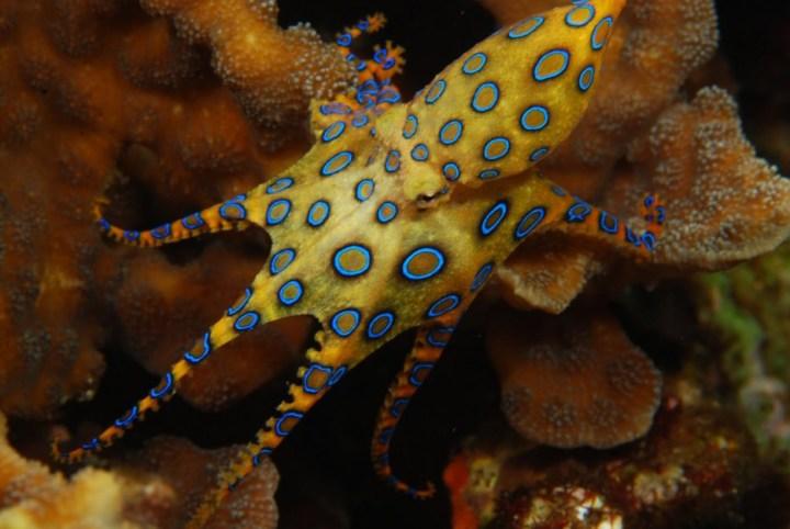 Os-animais-coloridos-mais-incríveis-da-natureza-Blog-Animal (30)