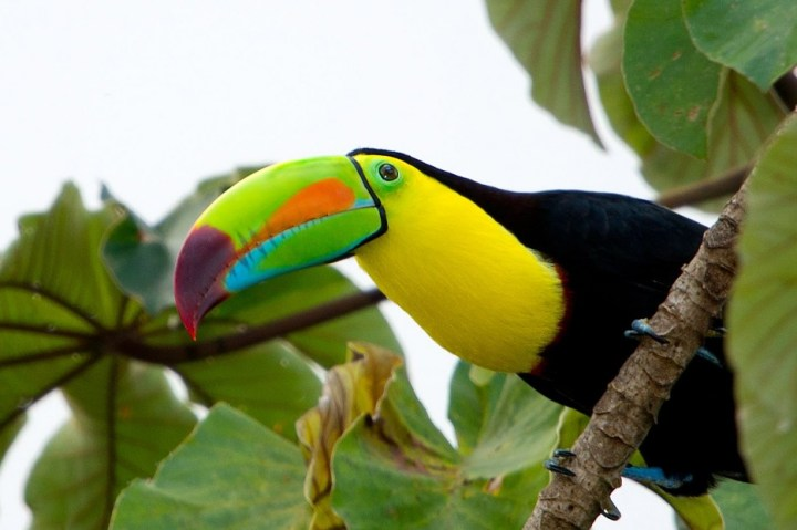 Os-animais-coloridos-mais-incríveis-da-natureza-Blog-Animal (31)