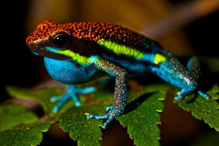 Os-animais-coloridos-mais-incríveis-da-natureza-Blog-Animal (34)