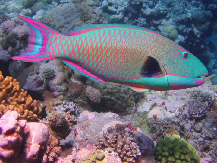 Os-animais-coloridos-mais-incríveis-da-natureza-Blog-Animal (36)