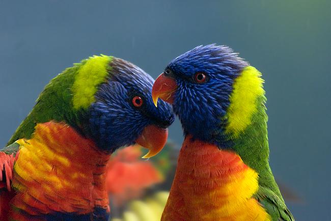 Os-animais-coloridos-mais-incríveis-da-natureza-Blog-Animal (4)