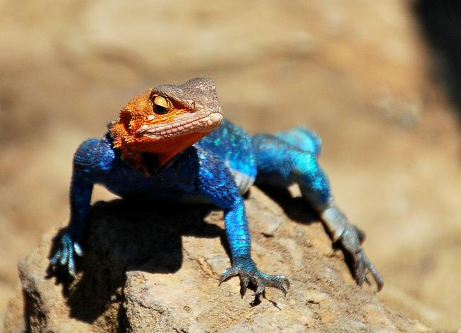 Os-animais-coloridos-mais-incríveis-da-natureza-Blog-Animal (5)