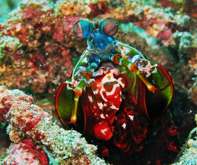 Os-animais-coloridos-mais-incríveis-da-natureza-Blog-Animal (7)
