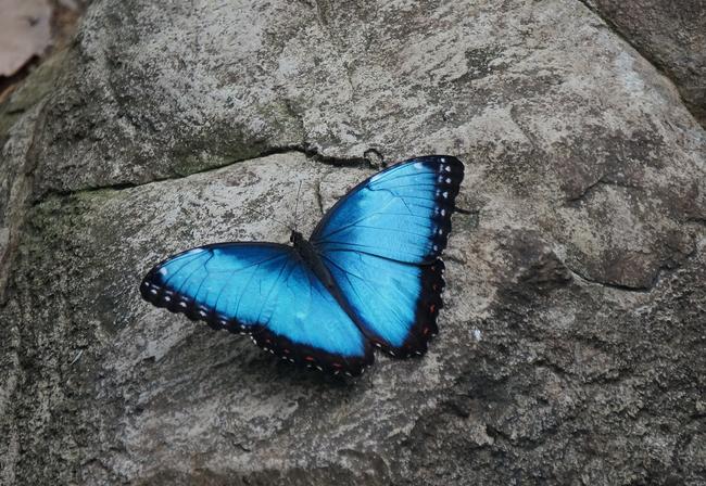 Os-animais-coloridos-mais-incríveis-da-natureza-Blog-Animal (9)