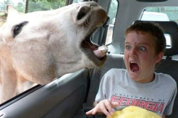 Os-melhores-photobombs-de-animais-Blog-Animal (2)