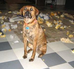 12-Provas-de-que-os-cachorros-são-iguais-a-crianças - Blog-Animal (9)