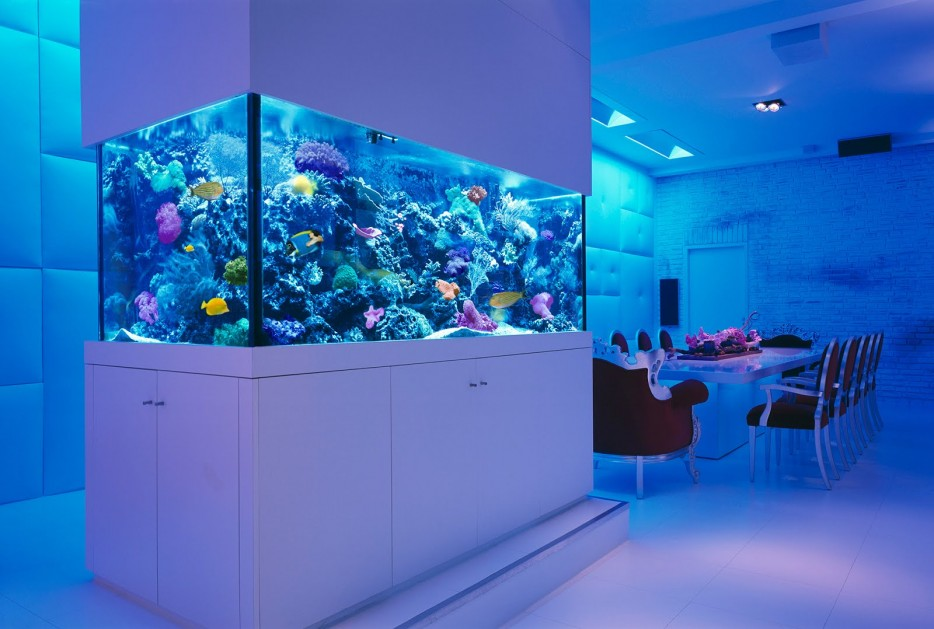 30 aquários incríveis que você gostaria de ter em casa