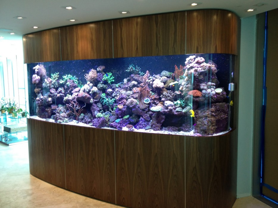 30-aquários-incríveis-que-ocê-gostaria de-ter-em-casa - Blog-Animal (15)